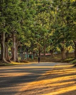 Woodlands Lusaka