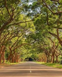 Woodlands Lusaka1